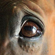 Worried eye of a horse